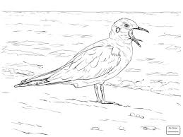 Seagulls American Herring Gulls Birds Coloring Pages For Kids
