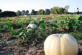 Ashland Berry Farm Halloween 2017 by Pumpkin Patch Guide For Richmond U0026 Beyond Richmond Mom