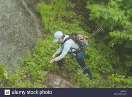 100 Wildcat Ridge Appalachian Trail Trail Adopters Work On The