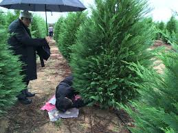 Leyland Cypress Christmas Tree by December 2016 Casa Maria Marianists