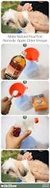Homemade Flea Powder For Carpet by Best 25 Ticks Remedies Ideas On Pinterest Natural Flea Remedies