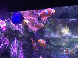 photo1 jpg picture of aquarium la rochelle la rochelle