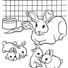 Adult Coloring Pages Rabbit