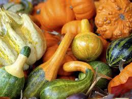 Varieties Of Pumpkins Uk by How To Grow Winter Squash Saga