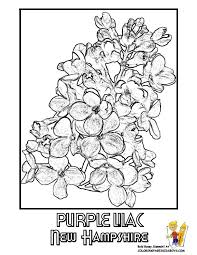 New Hampshire State Flower Coloring Page