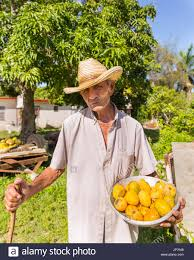 Cuban Farmer Offering Mangoes In Jibacoa Cuba
