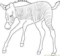 Baby Zebra Up Coloring Page