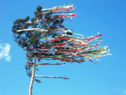 maibäume in köln zu verschenken und für weniger sparsame