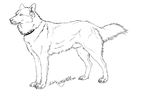12 Pics Of Realistic Husky Coloring Pages