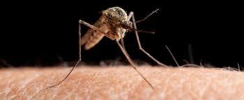 hausmittel gegen mücken so kommen sie mückenfrei durch