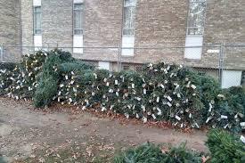 Christmas Tree Sales Underway Throughout Arlington