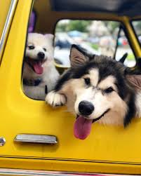Took The Dogs For Ice Cream In The Truck - Album On Imgur Hot Dog Of A Food Truck Pays Off For Monroe Fatherson Duo Driver In Arizona Forgets Leashed To Famous Dog Ramp For Truck Ideas Bravasdogs Home Blog The Best Is It Legal Put The Back Pickup Treat East Greenbush Albany Ny Mugzys Barkery Traveling With Your Pet This Holiday Part 4 Mckinney Animal Driving Lorry Stock Photos Images Alamy Crate Pickup N Treats Free Window Cute Canine Transportation Waiting Love Like A Truckin Farmer And Near Photo Getty Why You Shouldnt Let Your Ride Back One