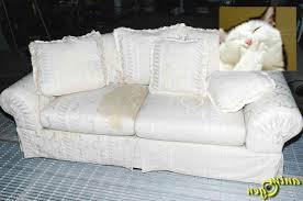qui pisse sur le canapé images de pipi canapé canapé design