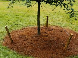 Types Of Christmas Trees To Plant by Types Of Stakes For Planting Trees How Tos Diy