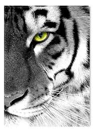 Inspirational Art Black And White Tiger Eye Canvas Wall Abstract Picture Eco Light Framed Ready