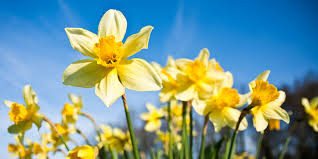 flowering bulbs to plant in autumn bunnings warehouse