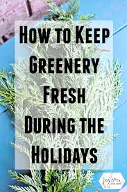 Christmas Tree Preservative Spray by How To Prevent Holiday Fresh Greenery From Drying Out