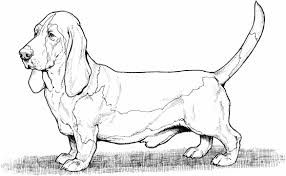 American Eskimo Coloring Page Boxer Free Dogs Pages Best Of Bloodhound