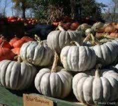 Pumpkin Patch In Colorado Springs Co 2013 by Pumpkins Diana U0027s Pumpkin Patch U0026 Corn Maze