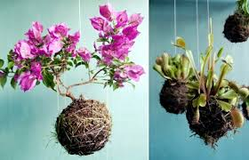 You Just Need A Little Creativity To Create Original Hanging Flower Pots Make Use Of Old Tree Branches As Pot Set Climbers In Colorful And