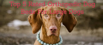 top 5 rated orthopedic dog beds for large dogs healthy dog life