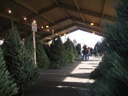 Types Of Christmas Trees To Plant by Christmas Trees At Richfield Farmer U0027s Market Bj Trees
