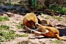 fauverie du mont faron toulon picture of zoo fauverie du faron
