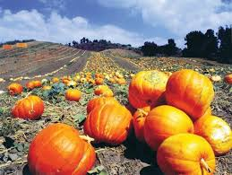 Faulkner County Pumpkin Patch by Where To Find The Perfect Pumpkin