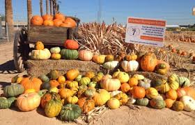 Pumpkin Patch Glendale Co by Rocker 7 Farm Patch Buckeye Arizona Farm
