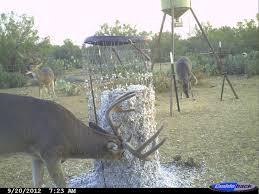 Protein Deer Feeders How To Make Homemade Gravity Deer Feeders