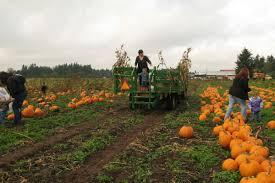Portland Pumpkin Patch Corn Maze by Pumpkin Patch Hay Rides Petting Zoo Hay Maze In Vancouver Wa