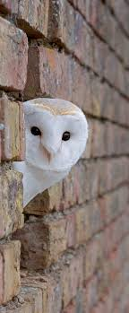 323 Best Barn Owls Images On Pinterest | Barn Owls, Owl Pictures ... Peekaboo Animals Game For Toddlers Learn Language Youtube Bnyard Cake Serendipity Cakes By Yvonne Dinosaurs Kids Dinosaur Learning Videos Peek A Camilles Casa Quiet Book Pages Barn Mailbox Lite Android Apps On Google Play Educational Insights 252936892212 1499 Slp Mse Peekaboo Ladse Octonauts App Ranking And Store Data Annie New Release Farm Day Hits Dads Who Diaper Baby Animal Amazoncom Toddler Toys