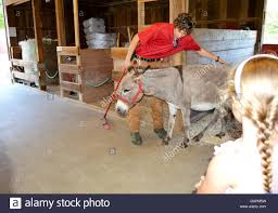 Donkey In Barn Stock Photos & Donkey In Barn Stock Images - Alamy 60 Best Garage Workshop Images On Pinterest Workshop 190 Designer Bunny Williams Hampton Wick Stock Photos Images Alamy 92 Upcycle Ideas Decor Diy Antique Porsche Home Usa Ohio Farms And Farmland For Sale United Country Best 25 Converted Barn Ideas Cabin Barns Barn Stuart Avenue Mapionet Estate South Homes We Love Helping Buyers Sellers Portsmouth Wavytv