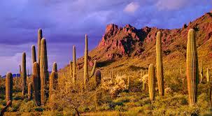 100 Paradise Foothills Apartments Catalina Tucson AZ Elevation