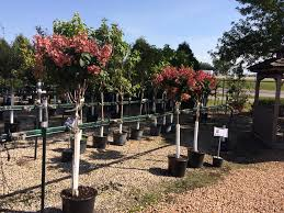 SALE 🎉  off trees shrubs and Natures Garden World