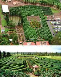 Pineapple Garden Maze Hawaii