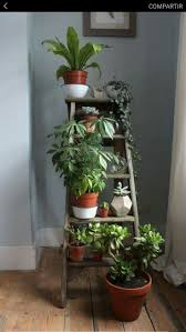 Small Plants For The Bathroom by Best 25 Interior Plants Ideas On Pinterest House Plants Indoor