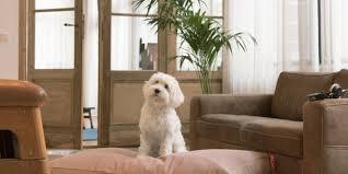 der ideale schlafplatz für hunde raum blick magazin