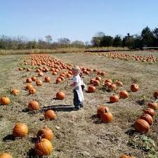 Southern Illinois Pumpkin Patches by 36 Best Pumpkins Pumpkins Everywhere Guide Of Places To Visit