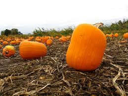Pumpkin Patch Near Dixon Ca by Pick Your Own Oregon Pumpkin Patches Funtober