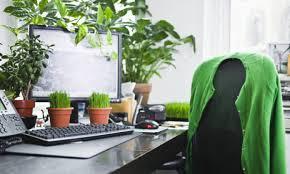 plante de bureau trois bonnes raisons d avoir une plante verte au bureau