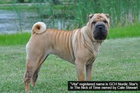 Do Shar Pei Lab Mix Shed by Chinese Shar Pei Grooming Bathing And Care Espree Animal Products