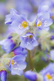 22 best Arctic Flowers images on Pinterest