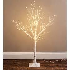Lighted Birch Trees