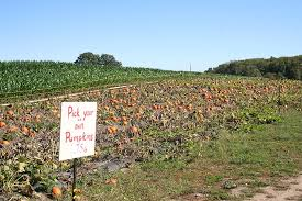 Best Pumpkin Farms In Maryland by 5 Favorite Pumpkin Patches For Pumpkin Picking In Ri