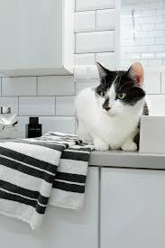 katze sitzt neben handtuch auf weißem bild kaufen