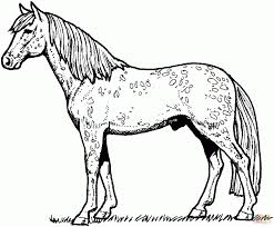 Horses Coloring Pages Appaloosa Horse Leopard Spotted Coat For Adults