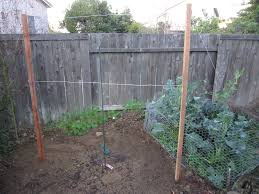 How To Build Grapevine Trellis | Bountiful Backyard Small Plot Intensive Gardening Tomahawk Permaculture Backyard Vineyard Winery Grapes In Your Own Backyard Lifestyle Bucks County Courier More About The Regent Winegrape Growing Your Grimms Gardens Trellis With In The Yard At Home How To Grow Grapes Steemit Seedless Stark Bros Grape Orchards Pinterest Orchards Seattle Wa Youtube Grown Grape Vine And Trellis Stock Photo Royalty First Years Goal