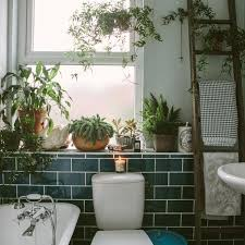 Plants In Bathroom Good For Feng Shui by Best 25 Plants In Bathroom Ideas On Pinterest Bathroom Plants