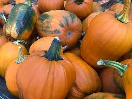 Wheatland California Pumpkin Patch by These 7 Norcal Pumpkin Patches Will Make You Enjoy Fall